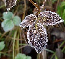 Frost by SophiaDeLuna