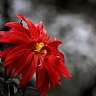 Fire & smoke by Celeste Mookherjee