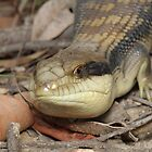 Blue-tongue lizard - Tiliqua scincoides by Andrew Trevor-Jones