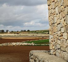 Stone Wall, Stony Fields, Malta by Jane McDougall