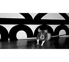 Fifi the rat is quite frankly stunned. Photographic Print
