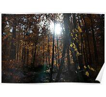 Autumn, Slovenia Poster