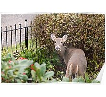 Deer Thief Photograph Poster