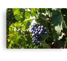 Napa Grapes Canvas Print