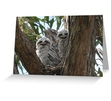 Tawny Frogmouth... Greeting Card