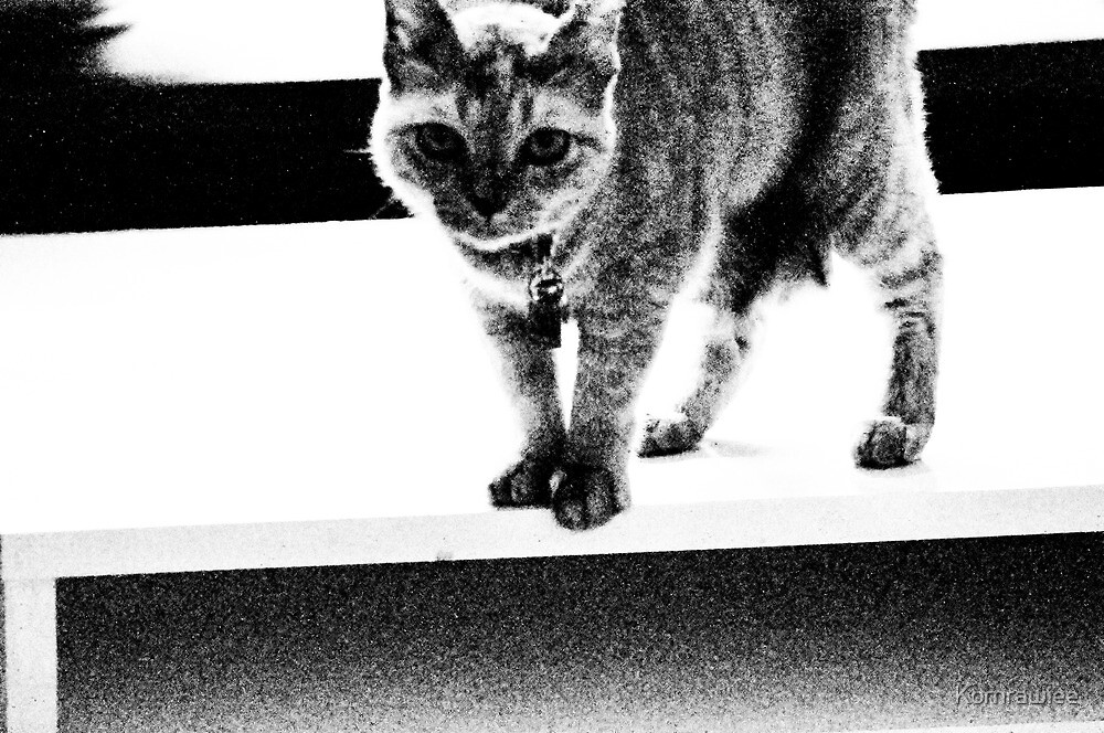 Mom! it is the Waltz steps, right?..Oh! no...that steps is not the Waltz...meow... by Kornrawiee