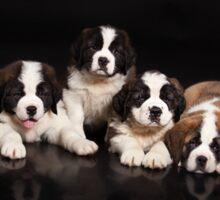 Seven Puppies Sticker