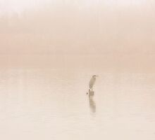 Still Water Heron by SuddenJim