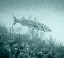 Great Barracuda by Andrew Bret Wallis