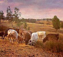 Grazing Kanmantoo, Adelaide Hills SA by Mark Richards