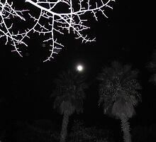 Moonlit Park 2, Barcelona by Sue Ballyn