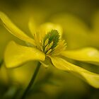 Soft yellow by tarsia