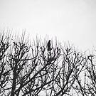 bird in a tree, Paris by wendys-designs