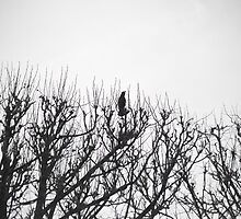 bird in a tree, Paris by wendys-designs