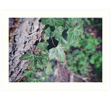leaves on a tree Art Print