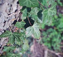 leaves on a tree by missbex