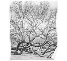 Nature: Fallen Tree Poster