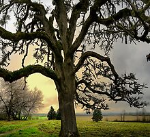 I Have A Story by Charles & Patricia   Harkins ~ Picture Oregon