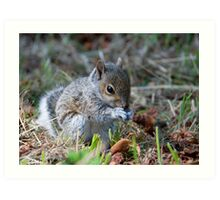 The Baby Squirrel close up Art Print