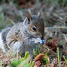 The Baby Squirrel close up by JulesPi
