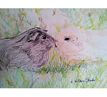 Black and White Guinea Pig Love Photographic Print