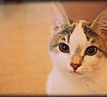 Pebbles the  dustbin cat by fruitcake