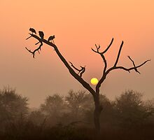 Sunrise at Bharatpur by Fotosas  Photography