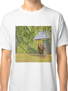 Beautiful miniature mare Classic T-Shirt