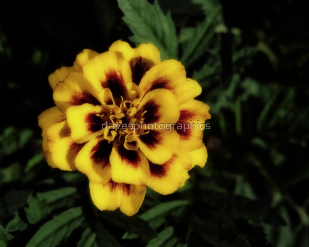 Yellow Flower Dark Effect by davesphotographics