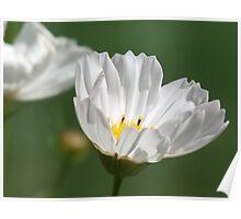 Breezy Blooms Poster