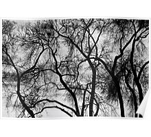 Black and White Silhouetted Trees  Poster