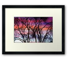 Colorful Silhouetted Trees 9 Framed Print
