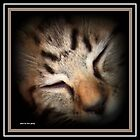 SWEEPY HEAD by Sherri     Nicholas