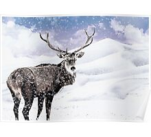 Winter Stag - A Reindeer Poster