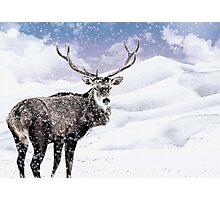 Winter Stag - A Reindeer Photographic Print