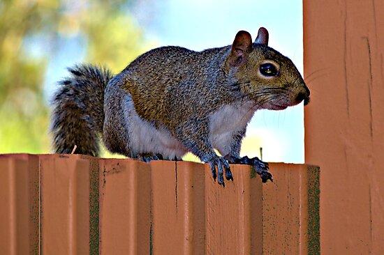 Sitting on the fence by Glenn Cecero
