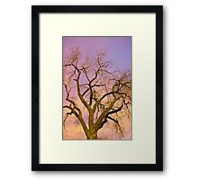 Pastel Cottonwood Sky Framed Print