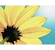 Yellow Wild Flower Photographic Print