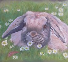 Lop eared rabbit by Sharon Herbert