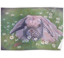 Lop eared rabbit Poster