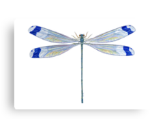 Helicopter Damselfly Canvas Print