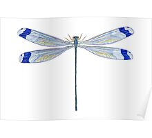 Helicopter Damselfly Poster
