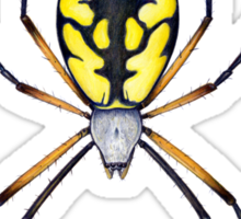 Argiope Spider Sticker