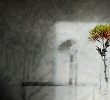 Bloom by Jenifer Wallis