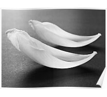 White abstract flower petals I Poster