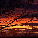 bonnie winter sunset no.1 by Babz Runcie