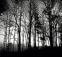Fog Mist Darkness Forest Rain Trees by Scott Mitchell