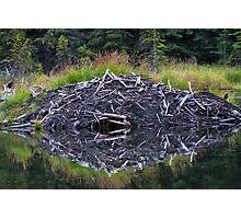 Beaver Lodge Photographic Print
