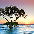 Summer Sunrise Cleveland Qld Australia by Beth  Wode