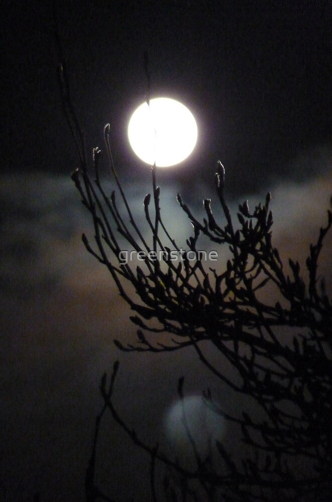One shot,two moons and a Chinese Witch Hazel. Cornwall. by greenstone